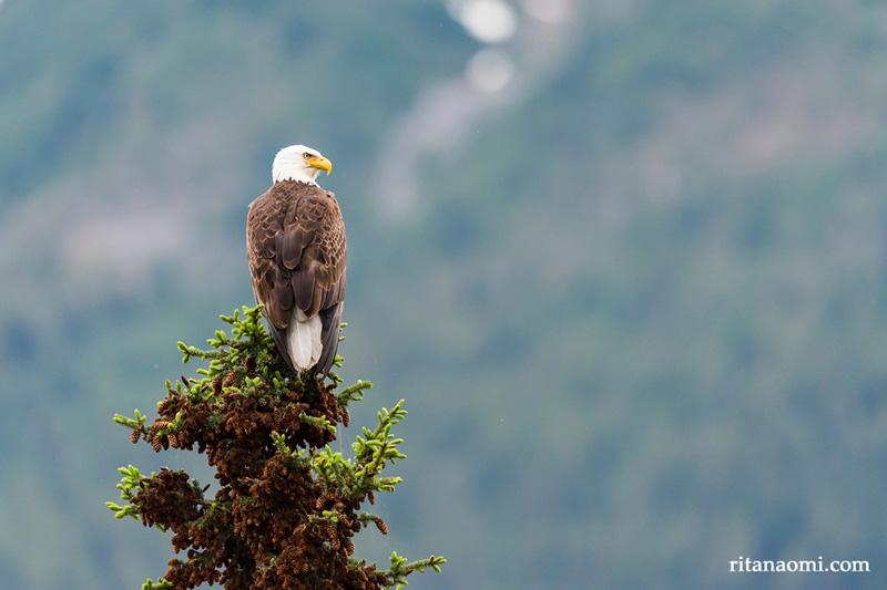 eagle-ritanaomi